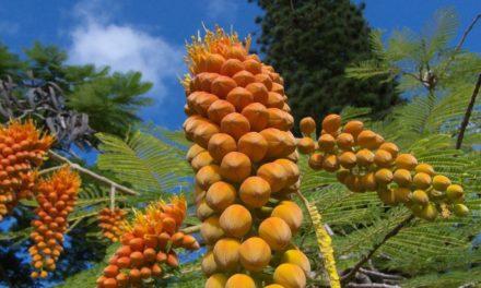 Hawaii, het veelzijdige vakantieparadijs