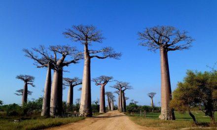 De 5 mooiste bezienswaardigheden van Madagaskar