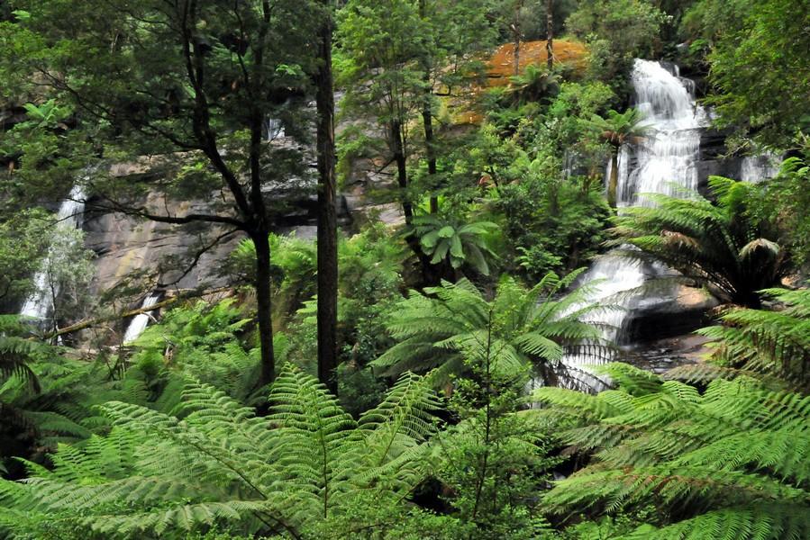 Australie Otway Ranges