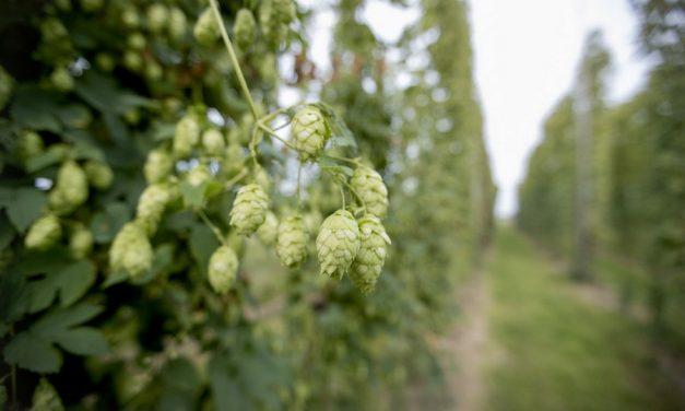 Verken het bierlandschap van Oost-Vlaanderen